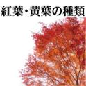 紅葉種類.png